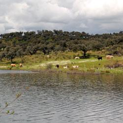 Imagen de Sotillo de las Palomas mapa 45635 1